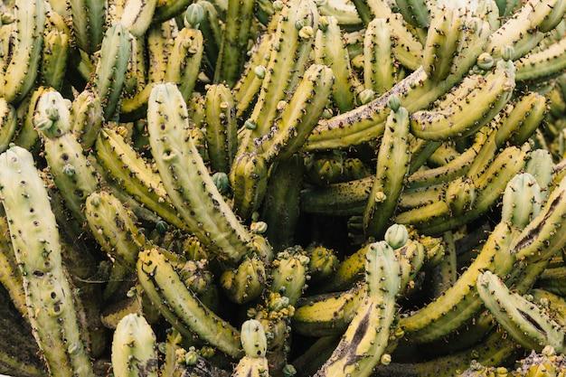 Marco completo de un cactus espinoso