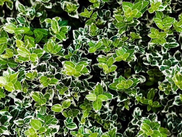 Marco completo de fondo de hojas verdes