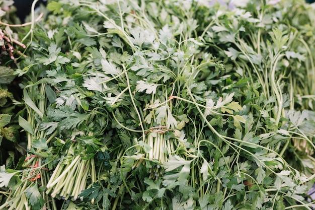 Marco completo de hierba de perejil fresco