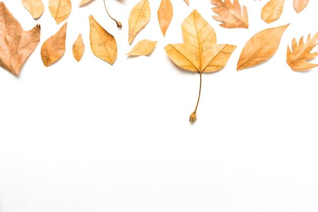 Marco de composición de hojas de otoño