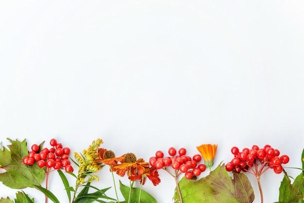 Marco de composición otoñal hecha de plantas de otoño bayas de viburnum, flores naranjas y amarillas sobre fondo blanco.