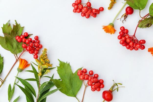 Marco de composición de otoño hecho de plantas de otoño, bayas de viburnum, dogrose, flores naranjas y amarillas sobre fondo blanco.