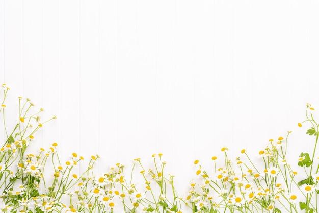 Marco floral de flores de manzanilla. vista plana endecha, superior.