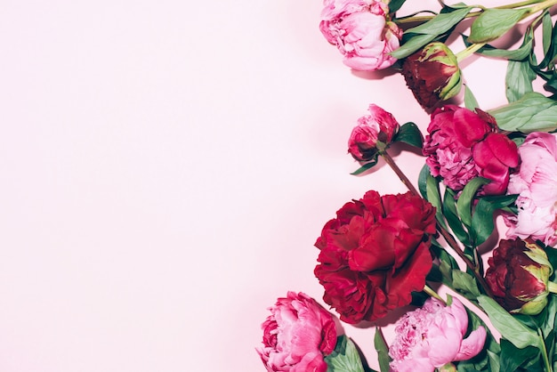 Marco floral peonías rosas con sombra dura sobre fondo pastel