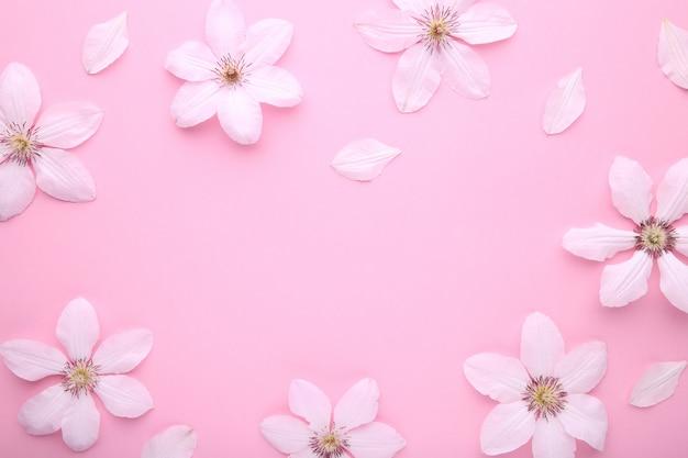 Marco de flores blancas en rosa, plano lay.