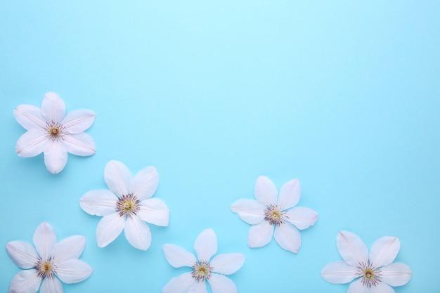Marco de flores blancas sobre fondo azul, plano.