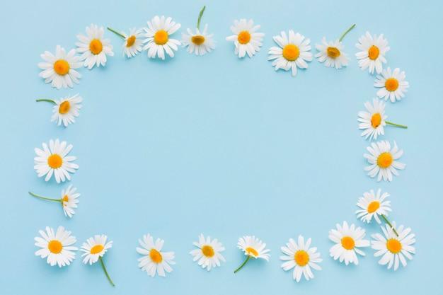 Marco de flores de margarita de vista superior