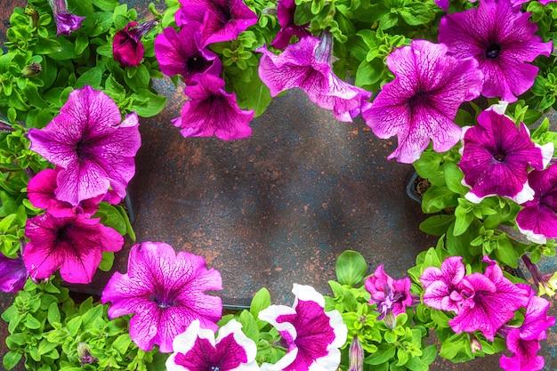 Marco de flores de petunias, patrón floral sobre un fondo oscuro
