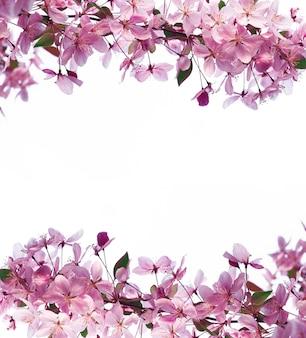 Marco de flores de primavera y espacio para texto