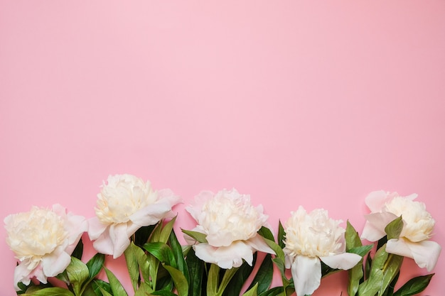 Marco de flores con ramas frescas de peonía blanca sobre fondo rosa con espacio de copia