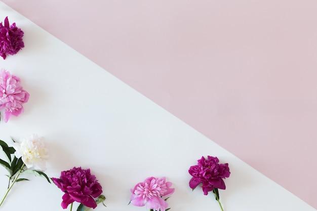 Marco de flores con ramas frescas de peonía sobre fondo de moda en colores pastel, plano y vista superior con espacio de copia