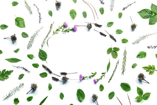 Marco con flores, ramas, hojas y pétalos aislados en blanco