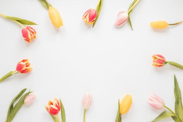 Marco de flores de tulipán en la mesa