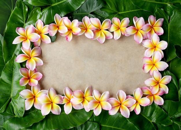 Marco hecho de flores de frangipani