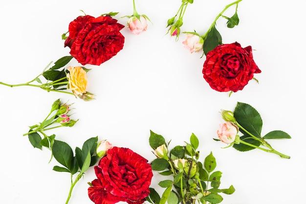 Marco hecho con hojas y rosas sobre fondo blanco