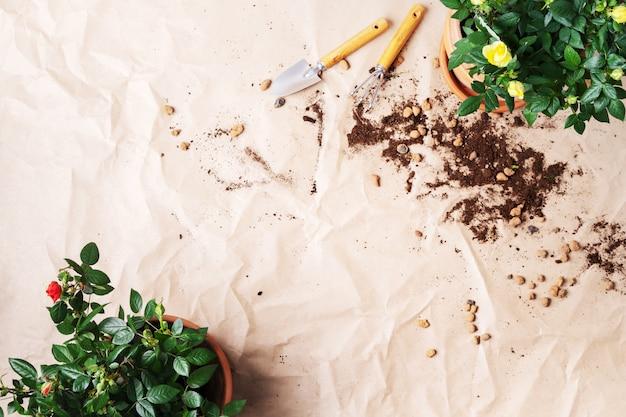 Marco de herramientas de jardinería con mini rosas en macetas con copia espacio. cómo plantar en macetas