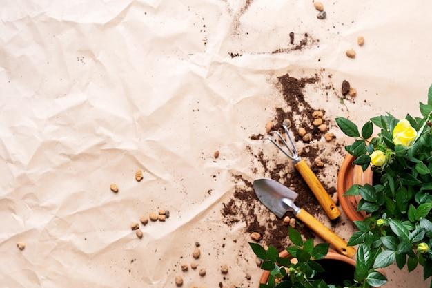 Marco de herramientas de jardinería con mini rosas en macetas con copia espacio. plantas de trasplante.