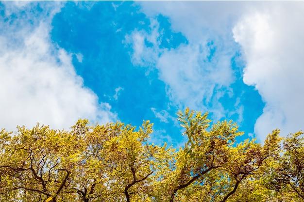 Un marco de hojas contra el cielo.