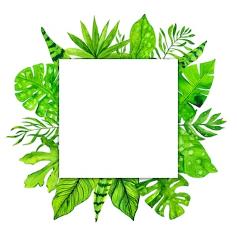 Marco de hojas exóticas tropicales sobre fondo blanco. ilustración acuarela