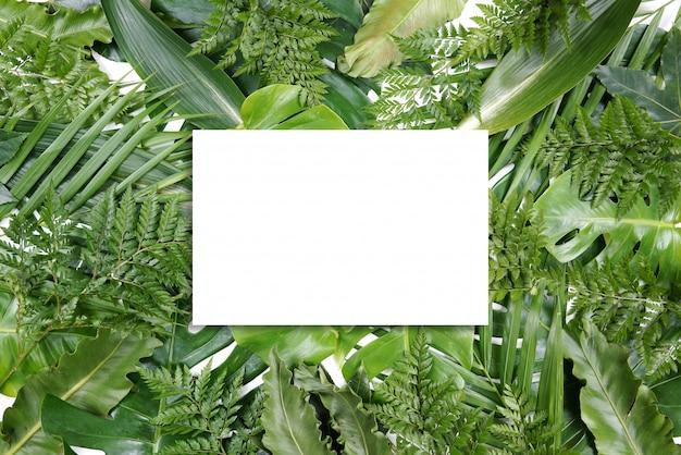 Marco de hojas de palma verde fresco con espacio de copia