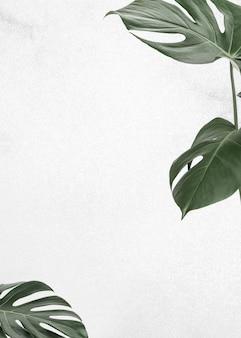 Marco de hojas verdes en blanco con espacio de copia