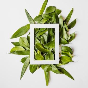 Marco en hojas verdes