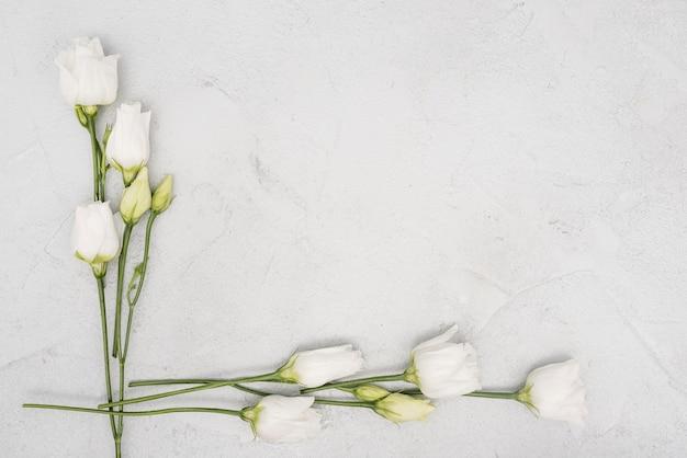 Marco minimalista hecho de rosas