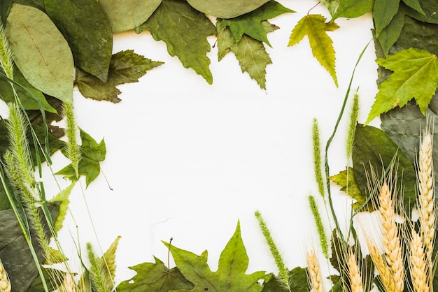 Marco natural de hojas