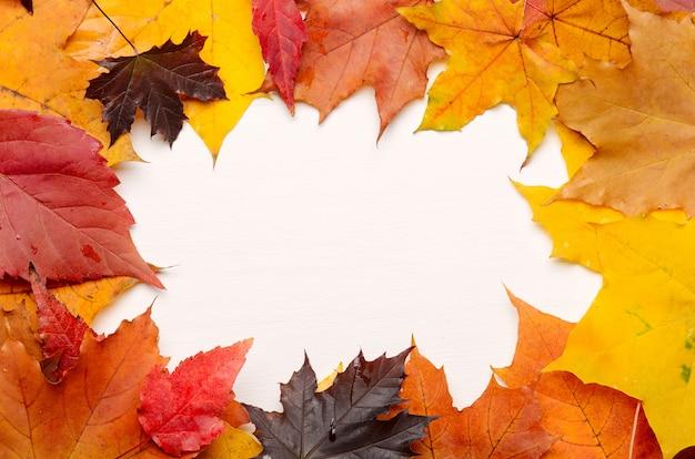Marco de otoño amarillo, rojo y púrpura hojas de otoño