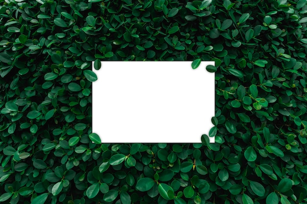 Marco de papel blanco sobre fondo de pared de hojas verdes