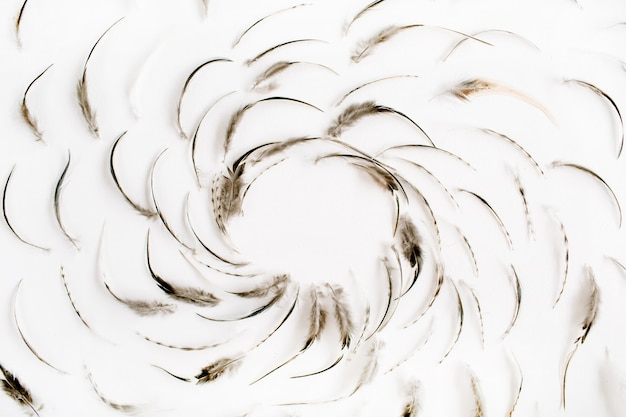 Marco de patrón de plumas de pájaro