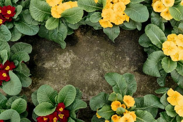 Marco plano laico con flores y fondo de estuco