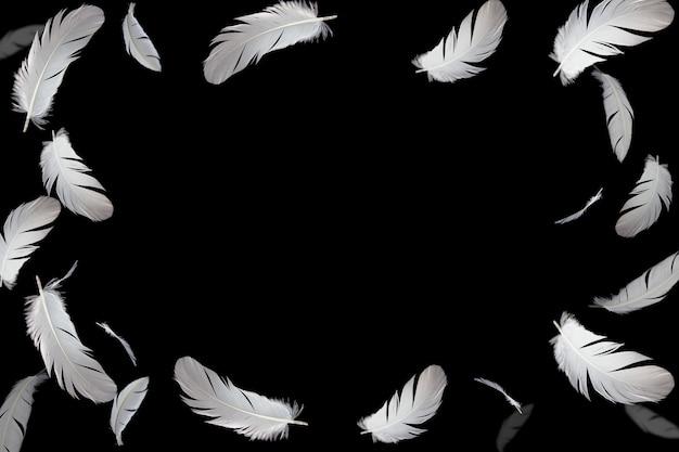 Marco de plumas blancas sobre negro