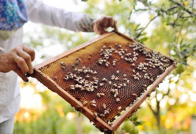 Marco para el primer plano de las abejas en manos de un apicultor en la superficie del sol y un colmenar