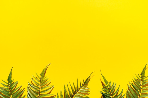 Marco de ramas de palma