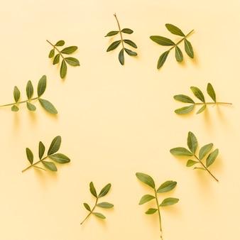 Marco de ramas de plantas verdes en mesa amarilla