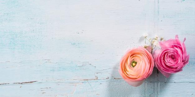 Marco rosado hermoso del ranúnculo en fondo de madera de la turquesa.