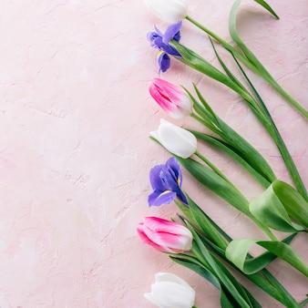 Marco de tulipanes e iris sobre un fondo rosa