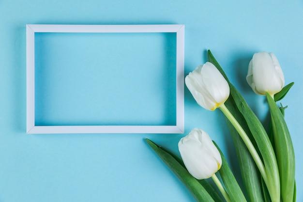 Marco vacío blanco con tulipanes frescos contra el fondo azul