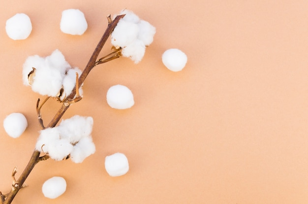 Marco de vista superior con flor de algodón en rama