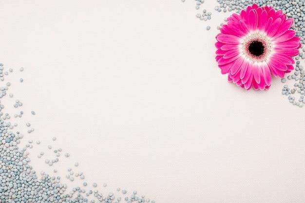 Marco de vista superior con flor rosa y guijarros