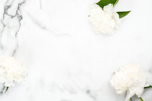 Marco de vista superior de flores de peonía blanca
