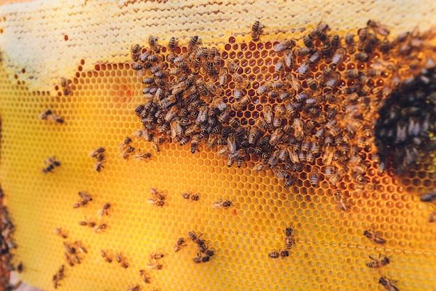 Marcos de una colmena de abejas. apicultor cosechando miel.