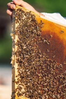 Marcos de una colmena. abejas trabajadoras en una colmena. las abejas convierten el néctar en miel.