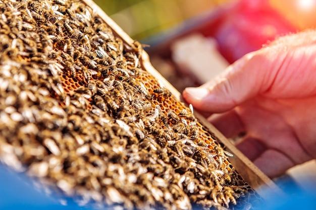 Marcos de una colmena de abejas