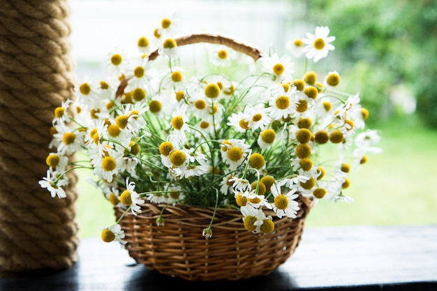 Margarita flores en la cesta. cesto con manzanilla en el jardín.