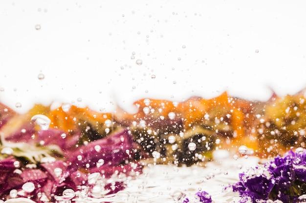 Margaritas coloridas húmedas sobre fondo blanco