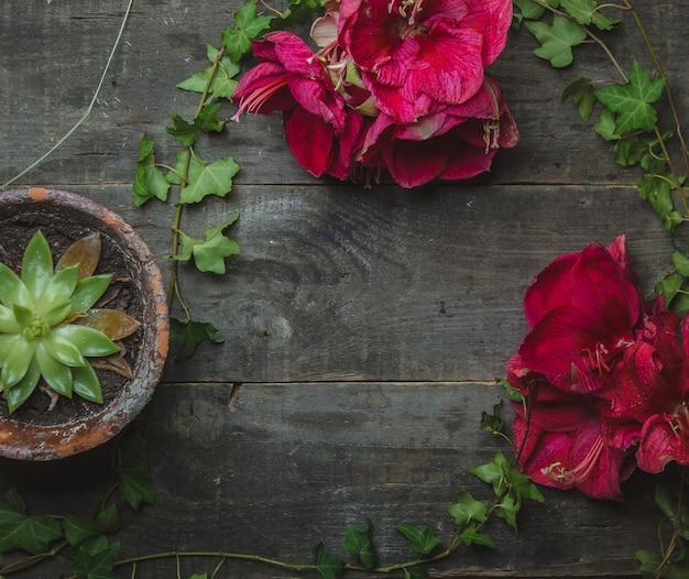 Margaritas rosadas y suculentas en una mesa de madera