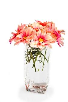 Margaritas rosadas en vidrio con gotas de agua. naturaleza muerta, aislado, blanco