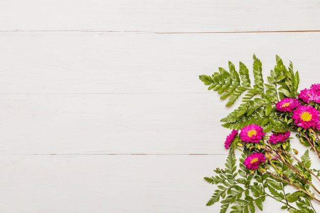Margaritas rosas con hojas sobre fondo blanco